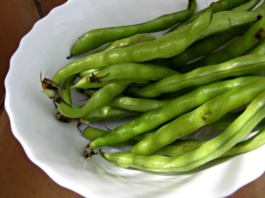 Whole unshucked fava beans or broad beans
